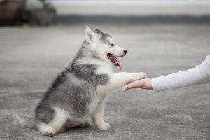 croquettes naturelles pour chien