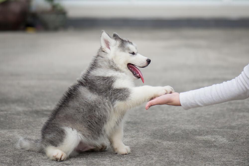 Croquettes naturelles pour chien : Pourquoi les choisir ?